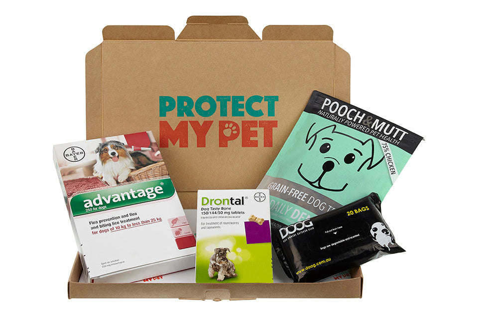 Dog Health Box Plus