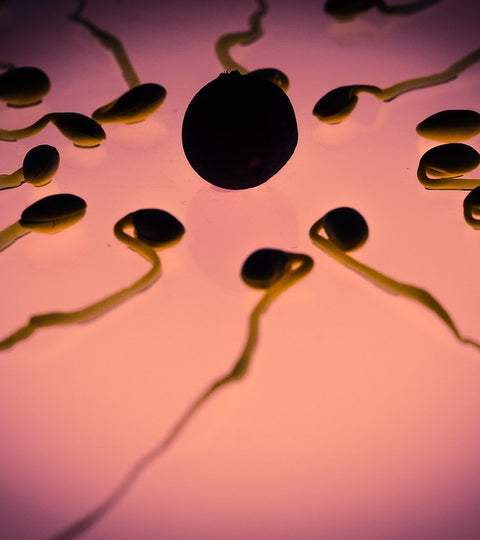 Male Fertility