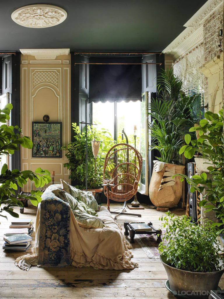 sunny room with plants and cane