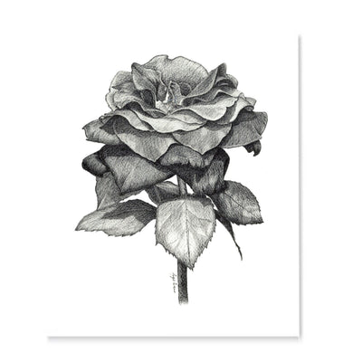Black Rose Art Print-Pen and ink-Brush Point Studio