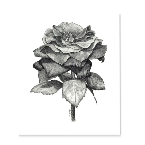 Black Rose-Art Print