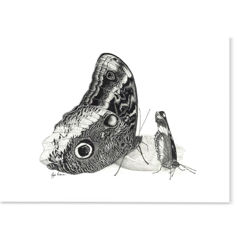 And black and white pen and ink drawing of an owl butterfly on a piece of orange.