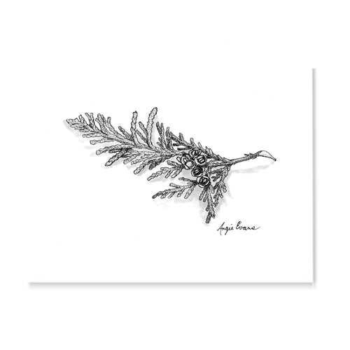 Small piece of cedar branch with white background done in pointillism black and white.