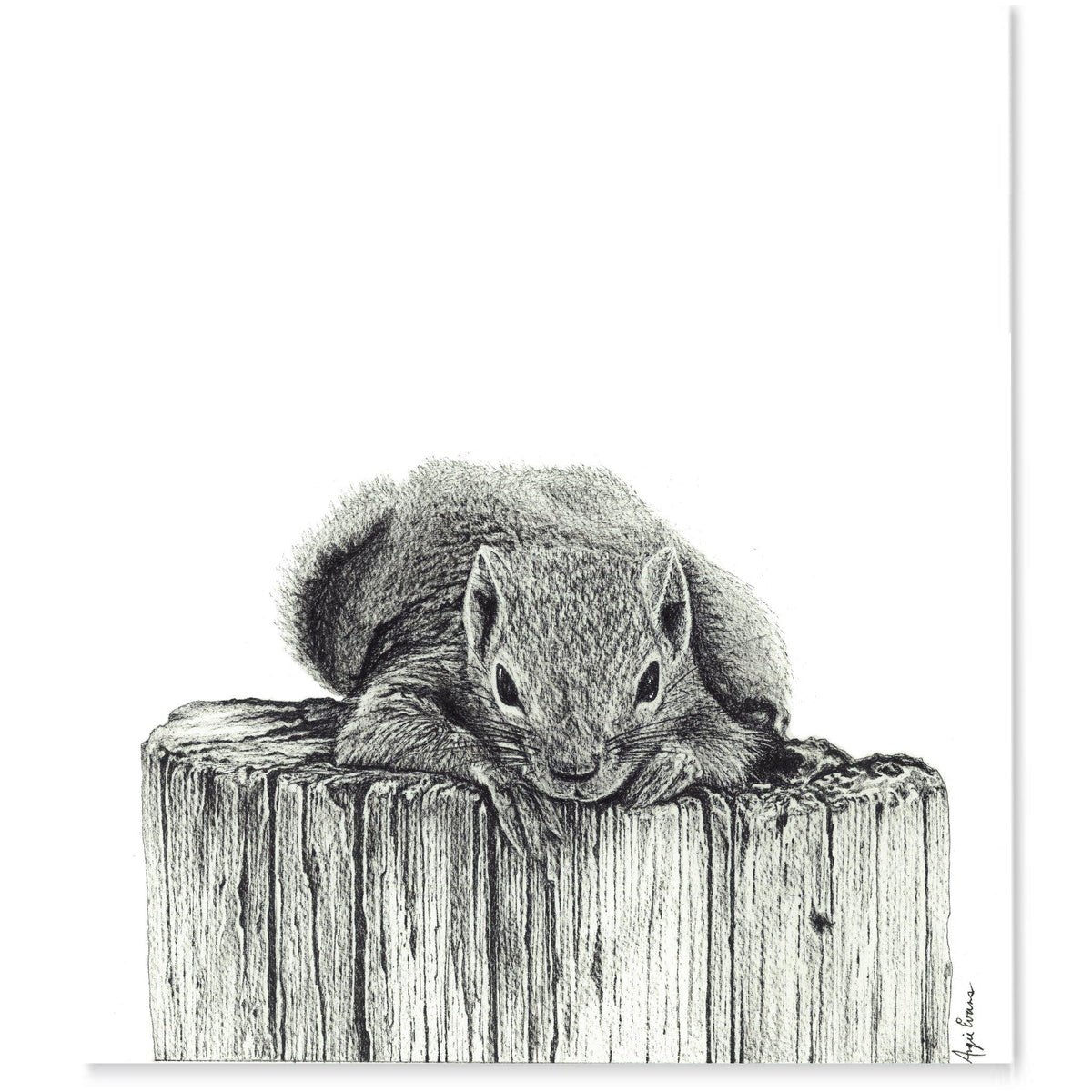 A squirrel lounging on top of a stump, black and white pen drawing.