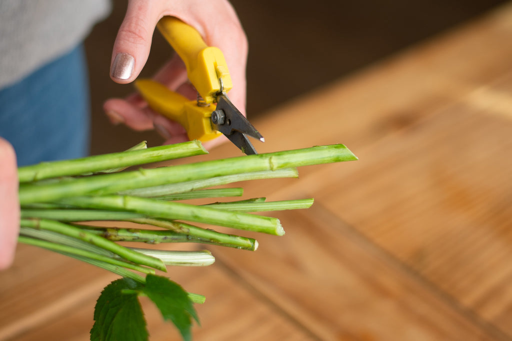 How to cut flower stems
