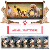 ANIMAL WHATEVER! (AnimalWhatever.com)