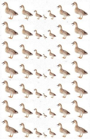 TheWhateverNetwork.com - Ducks