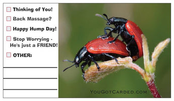 Ladybug Love! (Multiple Choice Cards!)