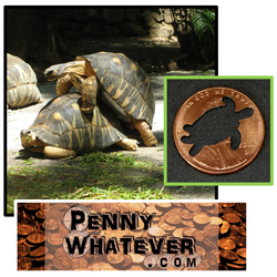 "Turtle Penny! (""Whatever Pennies"" from PennyWhatever.com) Full Disclosure: We don't know the difference between Turtles & Tortoises)"