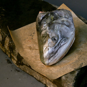 Coho Salmon Head - Salmon Head Shipped