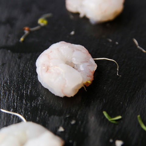 White Gulf Shrimp Close Up - Wild For Salmon