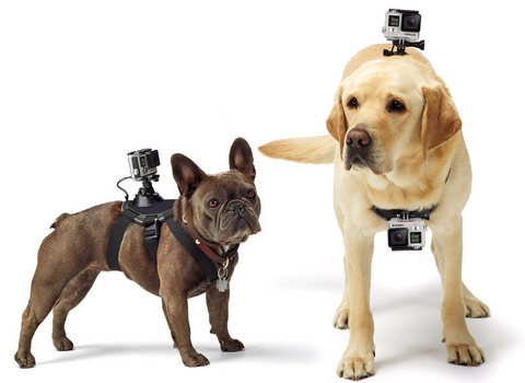 gopro dog mount