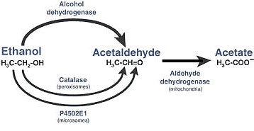 breaking down acetaldehyde from alcohol