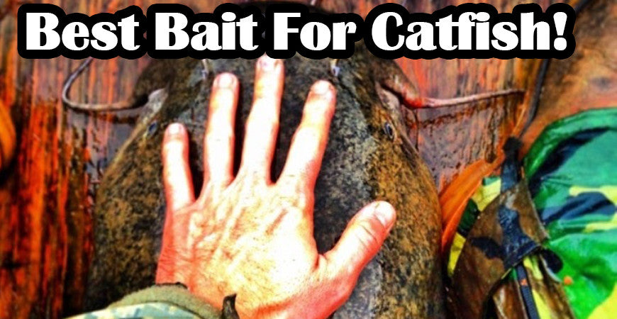 Best Bait For Catfish – A Common Sense Approach