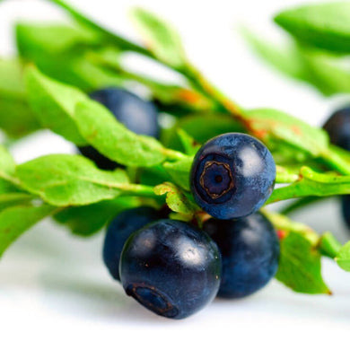 Bilberry Concentrate - Craft Flavour