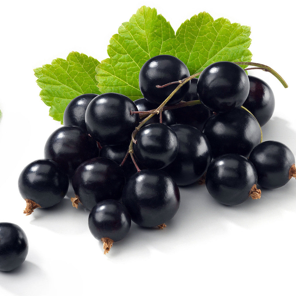 Blackcurrant Concentrate - Inawera