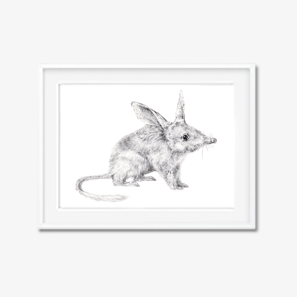Billy the Bilby