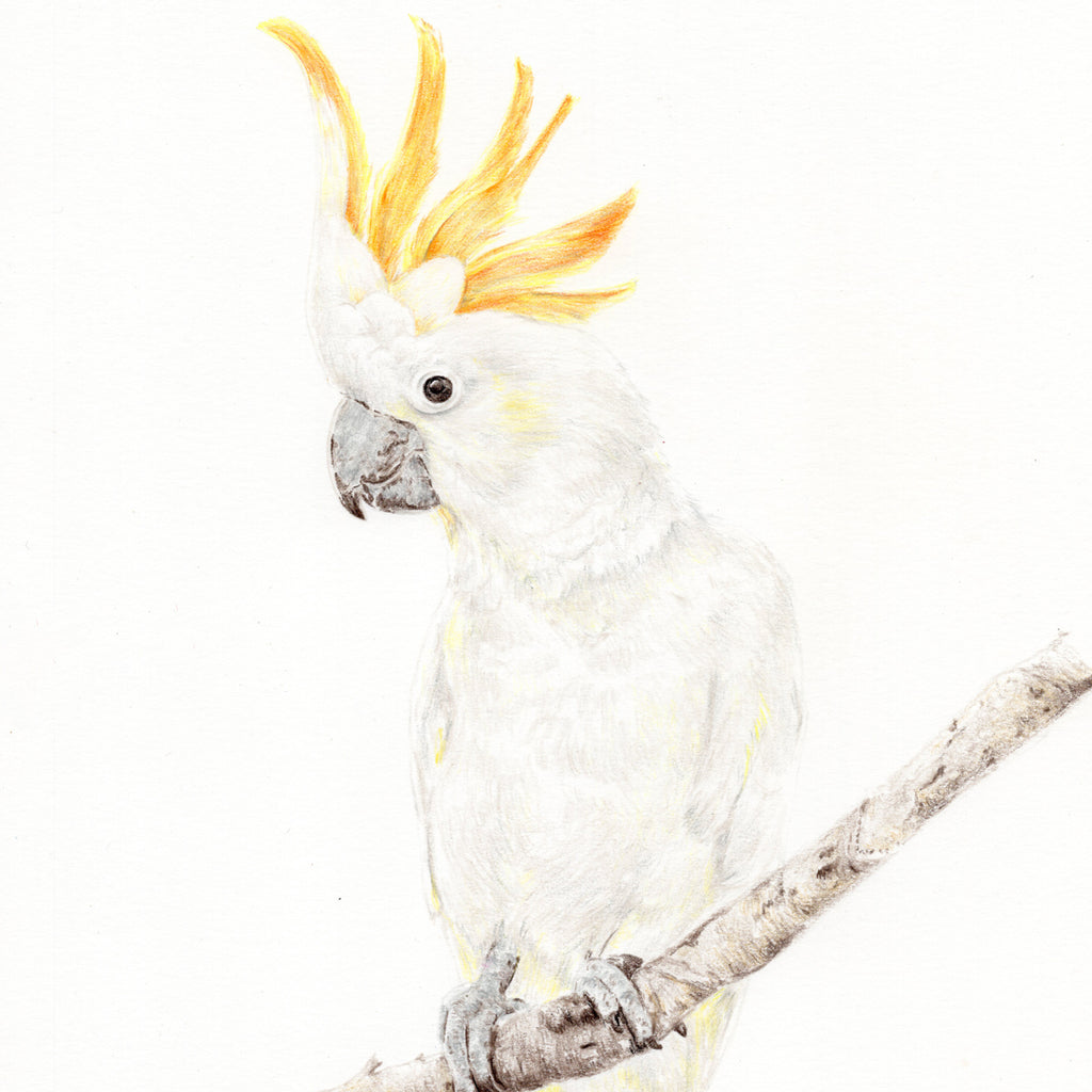 Brucey the Cockatoo