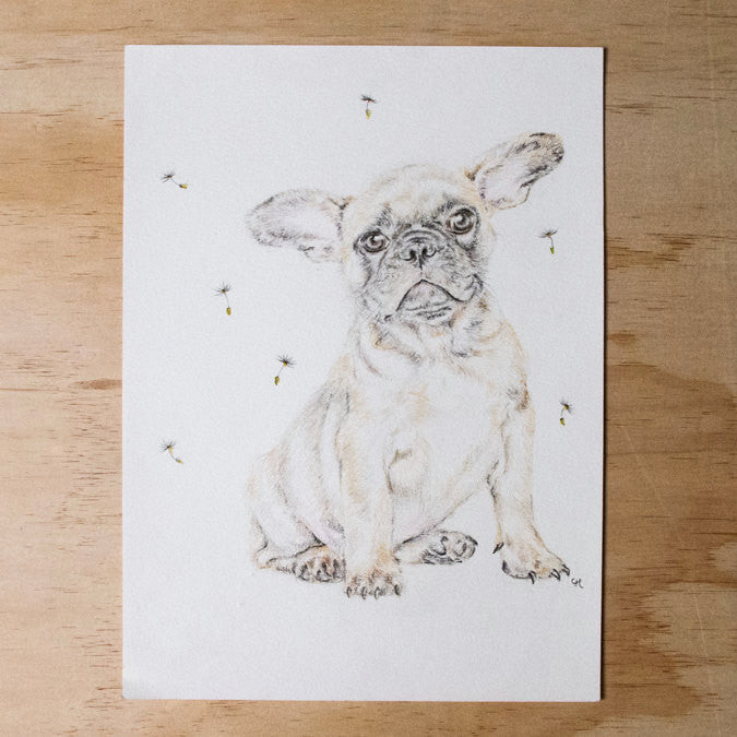 French Bulldog Original Pencil Drawing