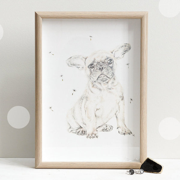 French Bulldog withith Dandelion
