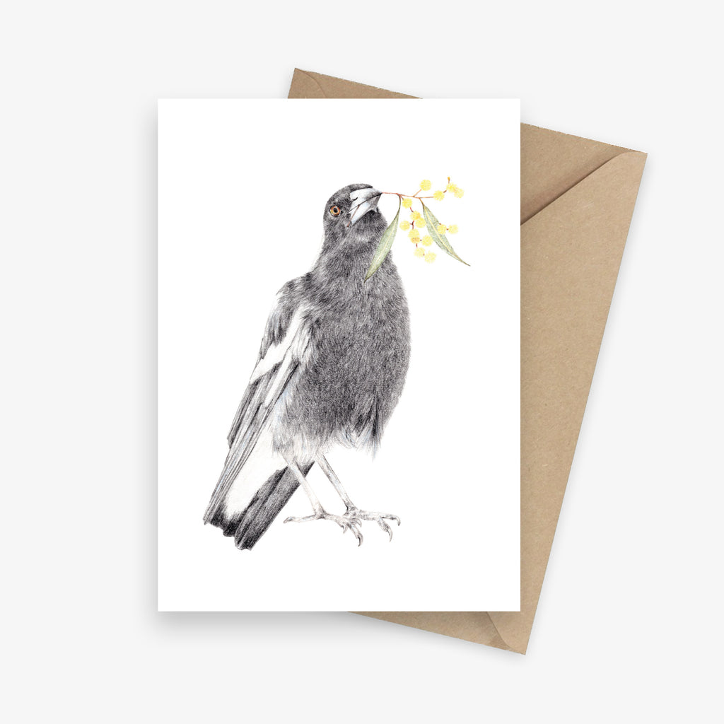 Greeting card featuring an Australian magpie with a sprig of wattle.