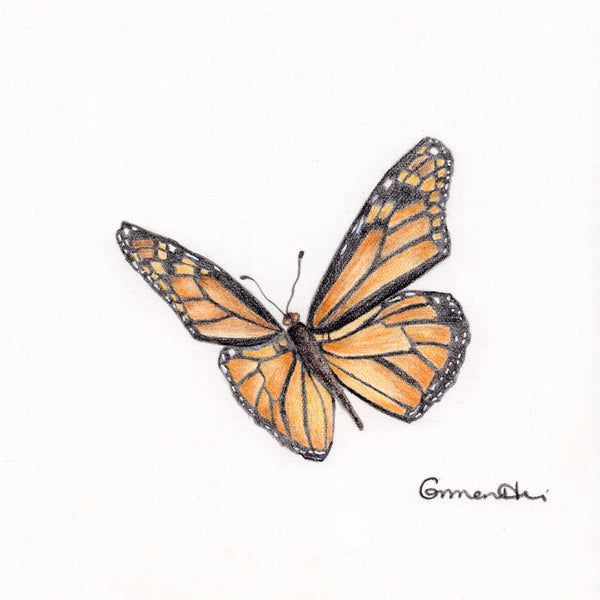 Monarch Butterfly #2