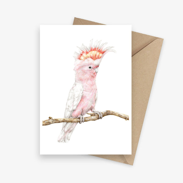 Greeting card featuring an Australian pink cockatoo.