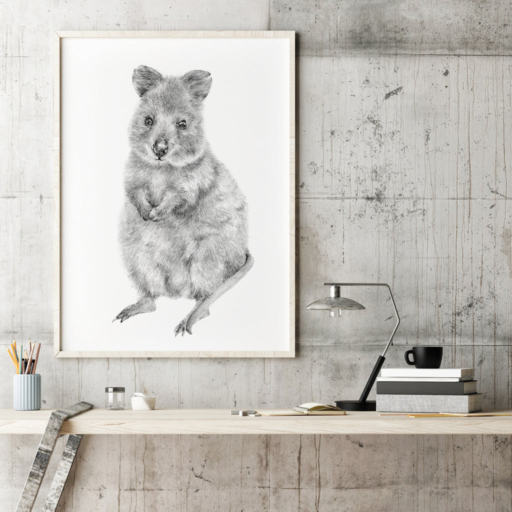 Rupert the Quokka