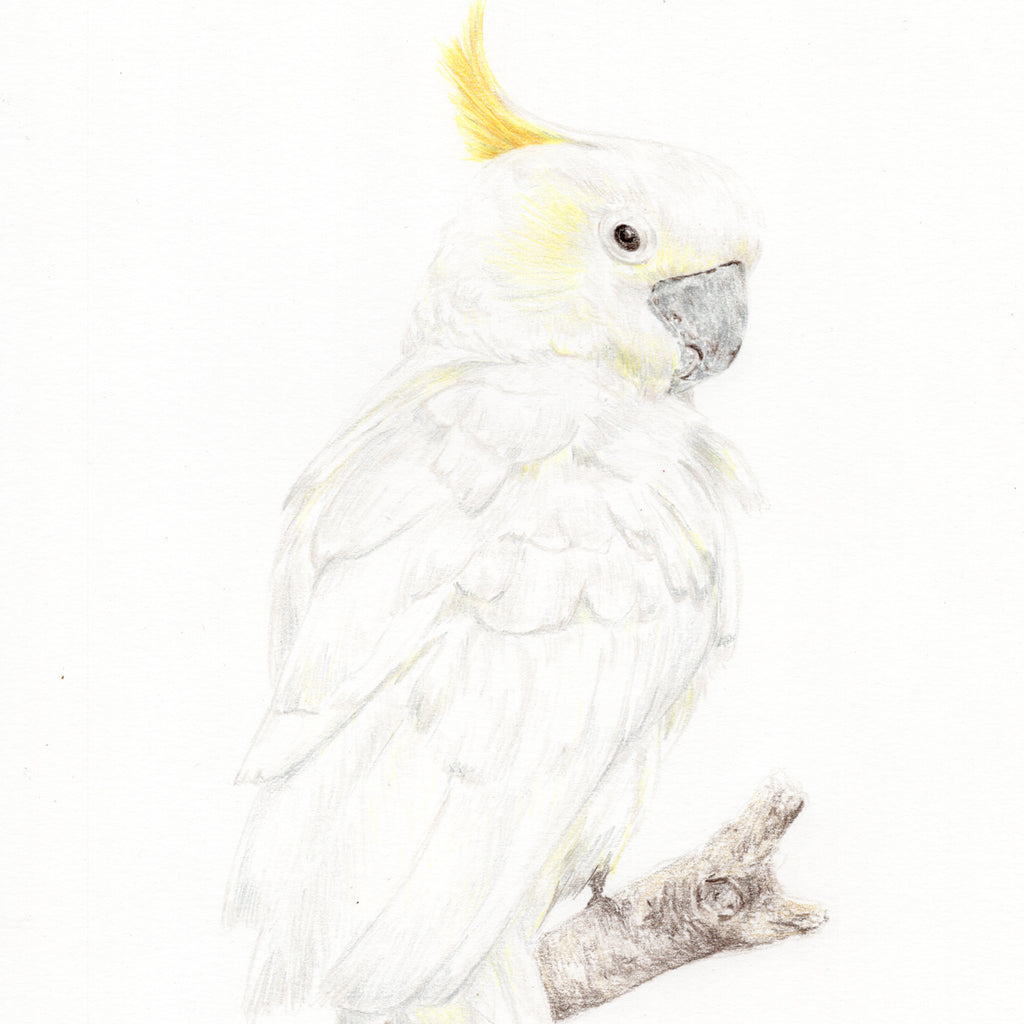 Sammy the Cockatoo