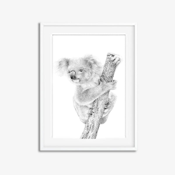 Koala pencil drawing