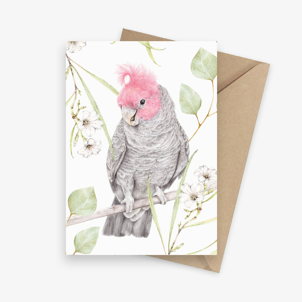 Illustrated greeting card featuring a gang gang cockatoo with Australian native flowers.