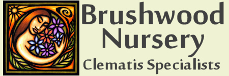 Brushwood Nursery, Clematis Specialists