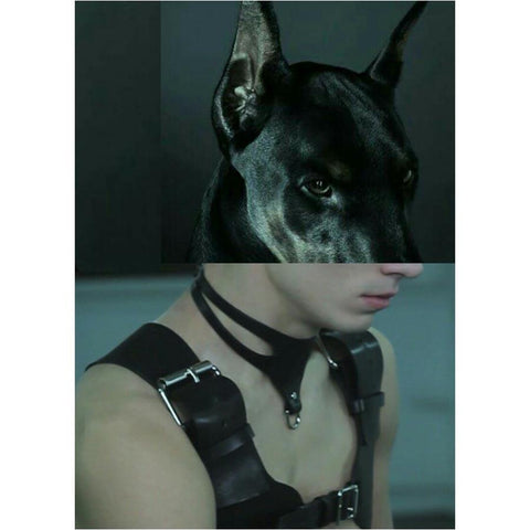 Naro Pinosa Doberman Leather Harness Postcard