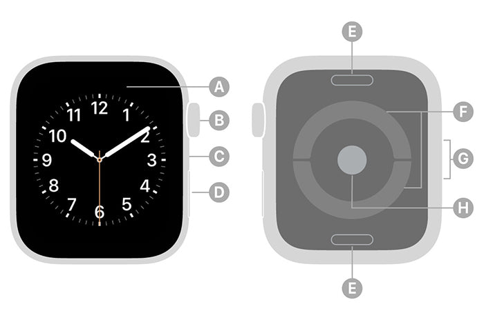 Parts of the Apple Watch
