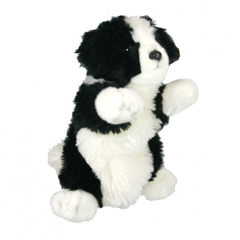 Puppet Border Collie pup