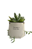 Word gift plant