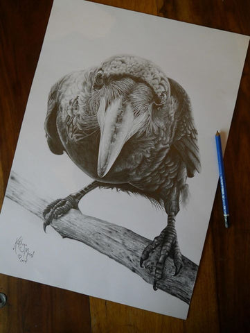 Illustration of crow pencil drawing