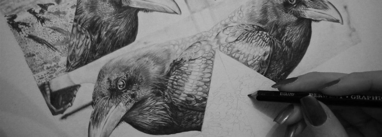 slideshow image crow illustration in progress