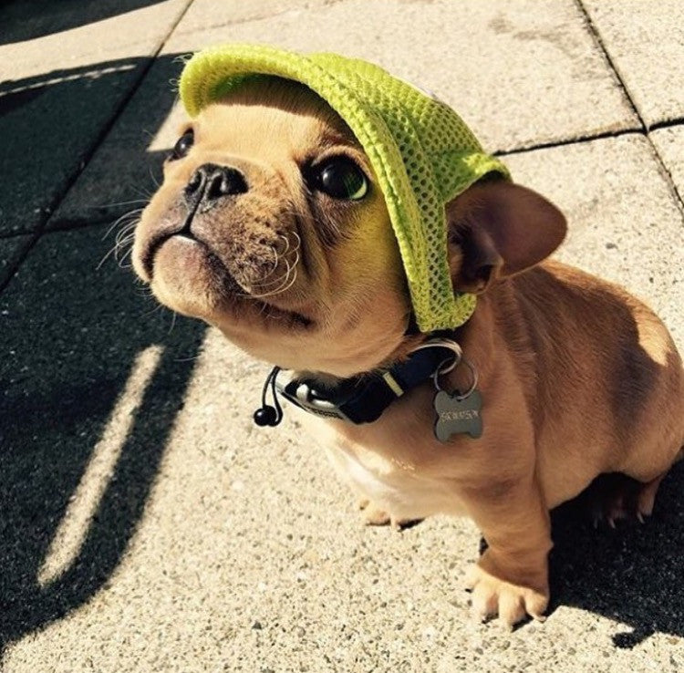 7 Reasons why these dog hats are all the rage this summer!