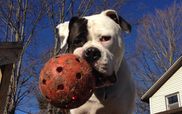 The Virtually Indestructible Dog Ball