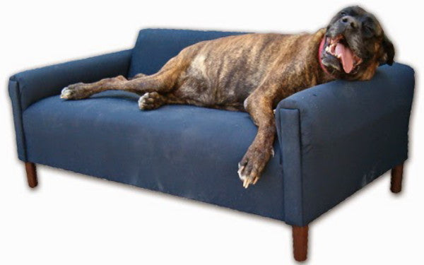 Is Your Dog a Couch Potato?