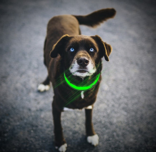 Collar - LED Dog Collar
