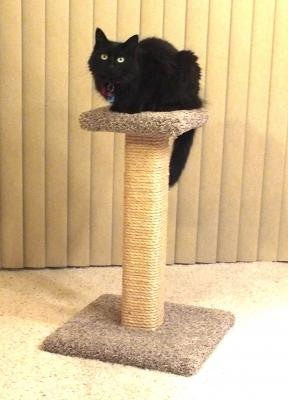 Photo of Straight Scratching Post with Platform