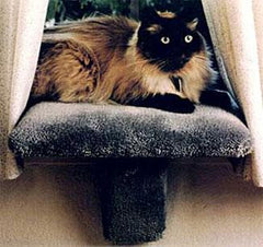 Padded Window Perches