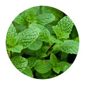 Flavouring - Flavor West - Natural Spearmint