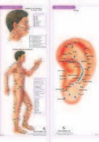 Buy 4 Acupunture Charts [Apr 01, 2008] B. Jain online for USD 15.7 at alldesineeds