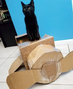 Did you know... there's a fun and easy way to keep your cat happy and occupied and keep your furniture intact?