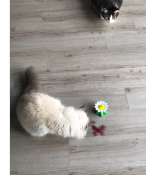 Rotating Butterfly Cat toy 3