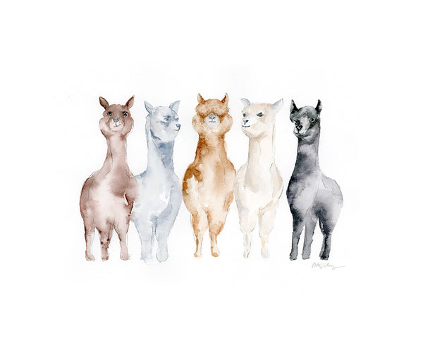 "Alpaca Watercolor Art Print - ""United Colors of Alpacas"""