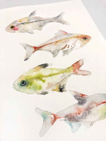 "X-Ray Fish Original Watercolor Painting - 8""x12"""